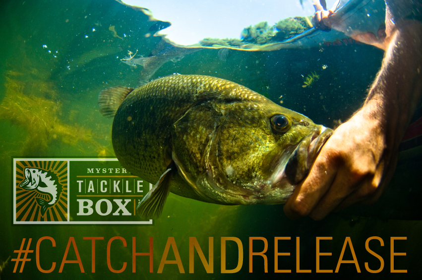 3 Reasons to Practice Catch and Release