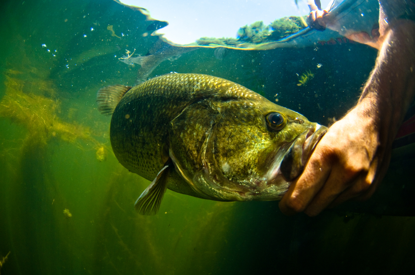 Bass fishing 101 all of your questions answered in one place for Good bass fishing spots near me