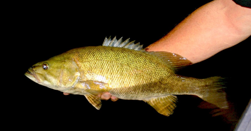 Pre Spawn Smallmouth Bass Fishing