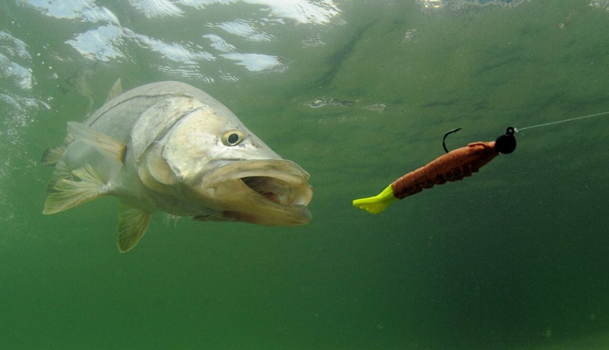 The 5 best fish to target in florida for Fishing for snook