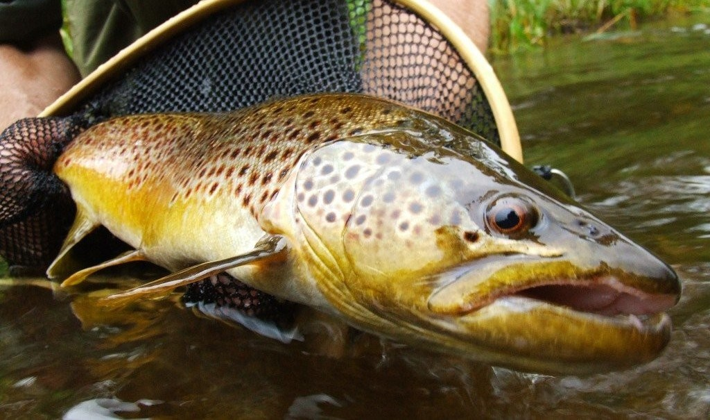 Trout Fishing Tips