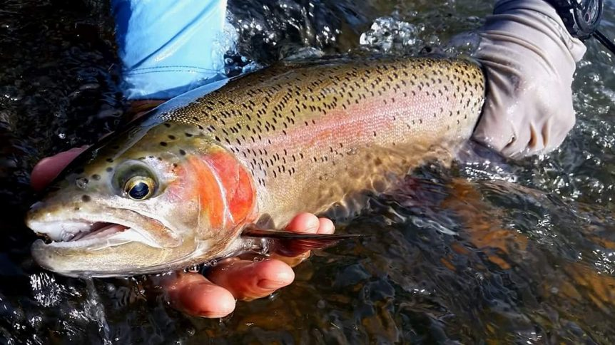 catch more trout