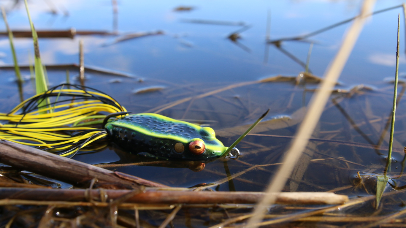 6 frog fishin 39 tips to catch you more bass for Frogs for fishing
