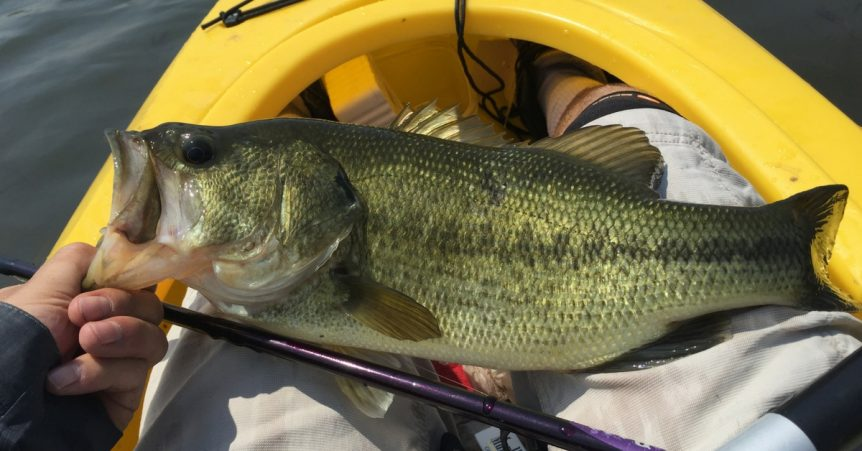 Post Spawn Bass: How To Catch Em When They Move Out Deep