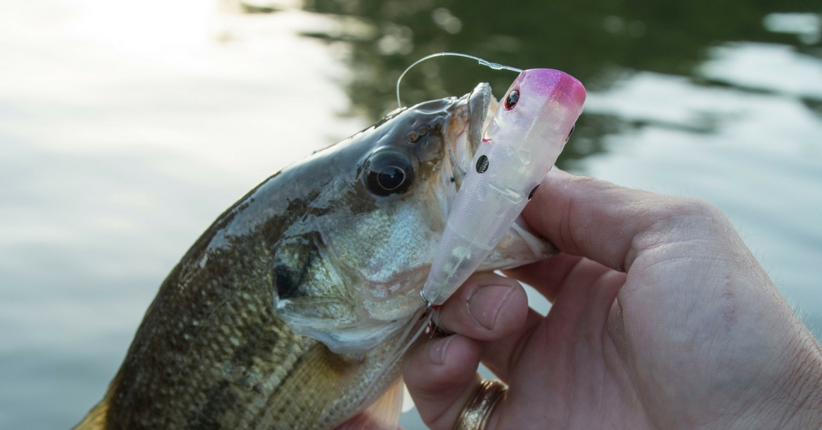 7 topwater fishing tips to dominate the surface for Topwater bass fishing