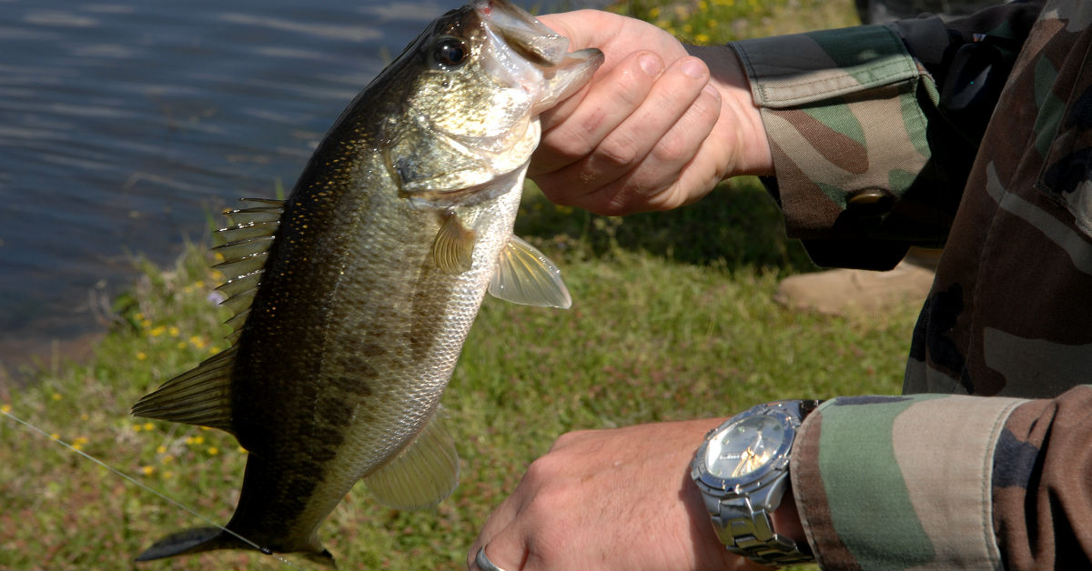 How to catch bass in cold murky water for How to catch bass fish