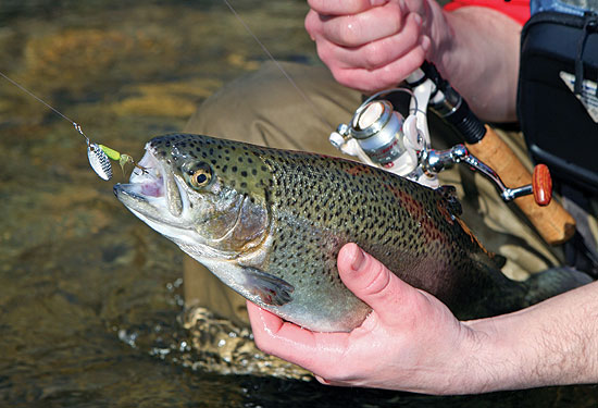 How To Fish Inline Spinners For Trout All Year Long