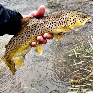 Tailspins For Trout