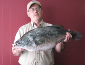 Kentucky State Record Bass