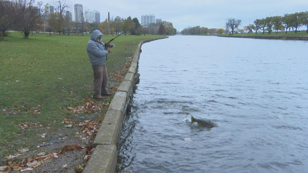 Best Fishing In Chicago