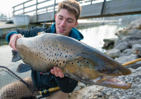 brown trout fall fishing